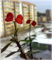 Энергетика растений помогает (Фен-шуй)